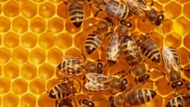 Photo of Salvemos a las abejas con el aprendizaje automático.