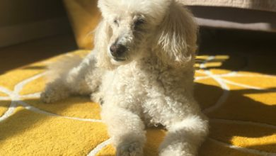 Good Dog recauda $ 6.7 millones para ayudarte a encontrar un cachorro