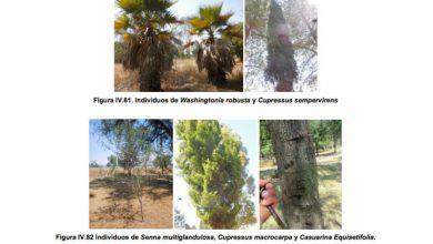Photo of Quitarán 5 mil 196 árboles para construir aeropuerto en Santa Lucía