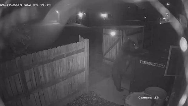 [TLMD - Denver] Oso intenta escapar con la basura de una casa en Colorado