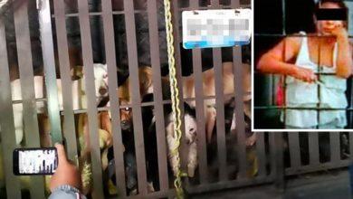 VIDEO: Mujer vendía carne de perro, descubren su refrigerador lleno de carne de perro, intentan lincharla vecinos