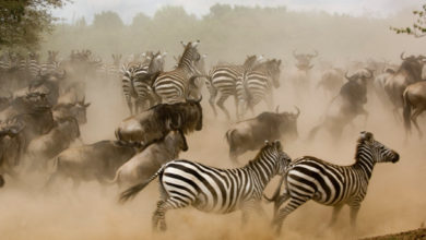 Photo of The Zebra recauda $ 38.5M a medida que la carrera del mercado de seguros se calienta