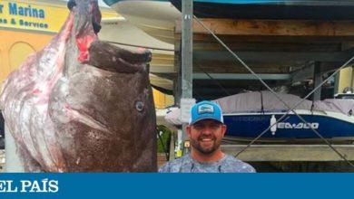 Photo of El mero más viejo jamás pescado en EE UU tenía 50 años y era enorme
