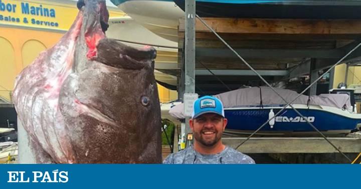 El mero más viejo jamás pescado en EE UU tenía 50 años y era enorme 1